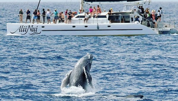 Alii-Nui-Whale-Watch-7