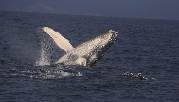 Pacific-Whale-Foundation-Whale-Watch-Tour-2