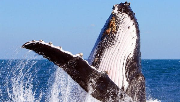 Pacific-Whale-Foundation-Whale-Watch-Tour-6
