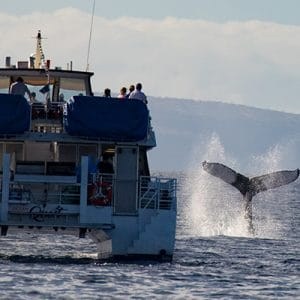 Pacific-Whale-Foundation-Whale-Watch-Tour-8