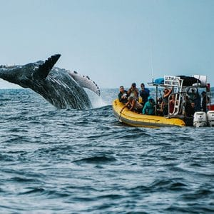 ultimate-whale-watch-tour5