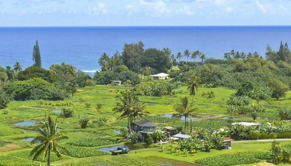 aloha-hana-van-tour-2