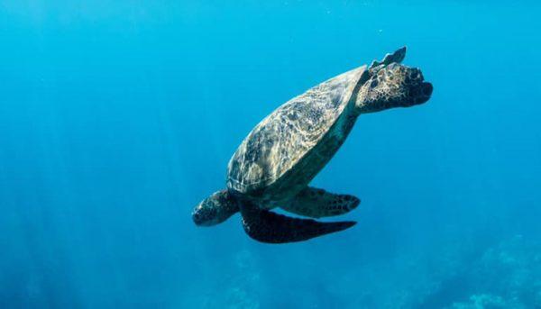 calypso-snorkel-tour-10