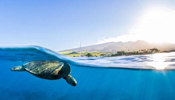 calypso-snorkel-tour-11