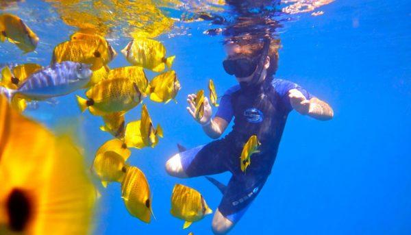 calypso-snorkel-tour-4