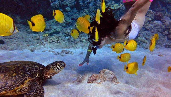 calypso-snorkel-tour-7