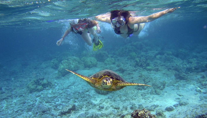 maui-activities-blue-water-snorkel-tour