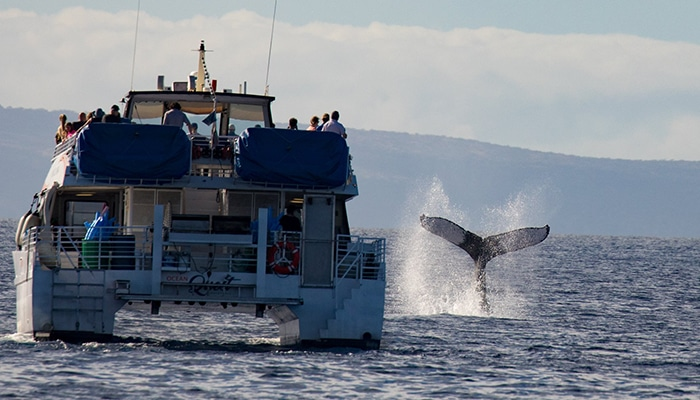 maui-activities-pacific-whale-watch