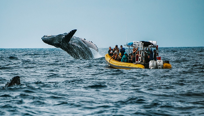maui-activities-ultimate-whale-watch