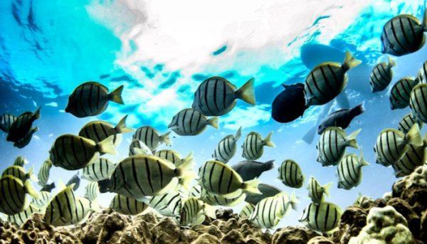 trilogy-snorkel-tour-tickets-5