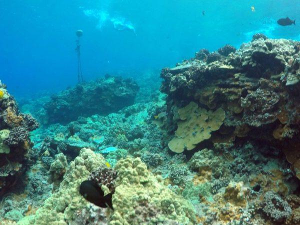 wailea snorkeling